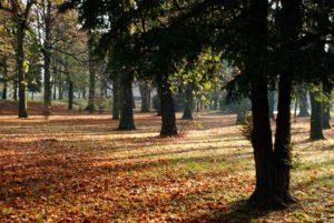 Jeseň v Parku M. R. Štefánika. Foto: Jozef Čery