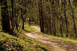 Lesné cestičky na Brezine. Foto: Mariana Ďurišová