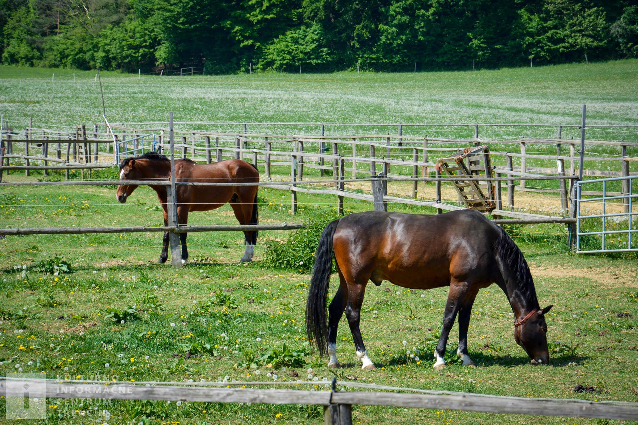 Hipoterapiu - liečbu koňom realizuje na Gazdovstve Uhliská o.z. Hipoško