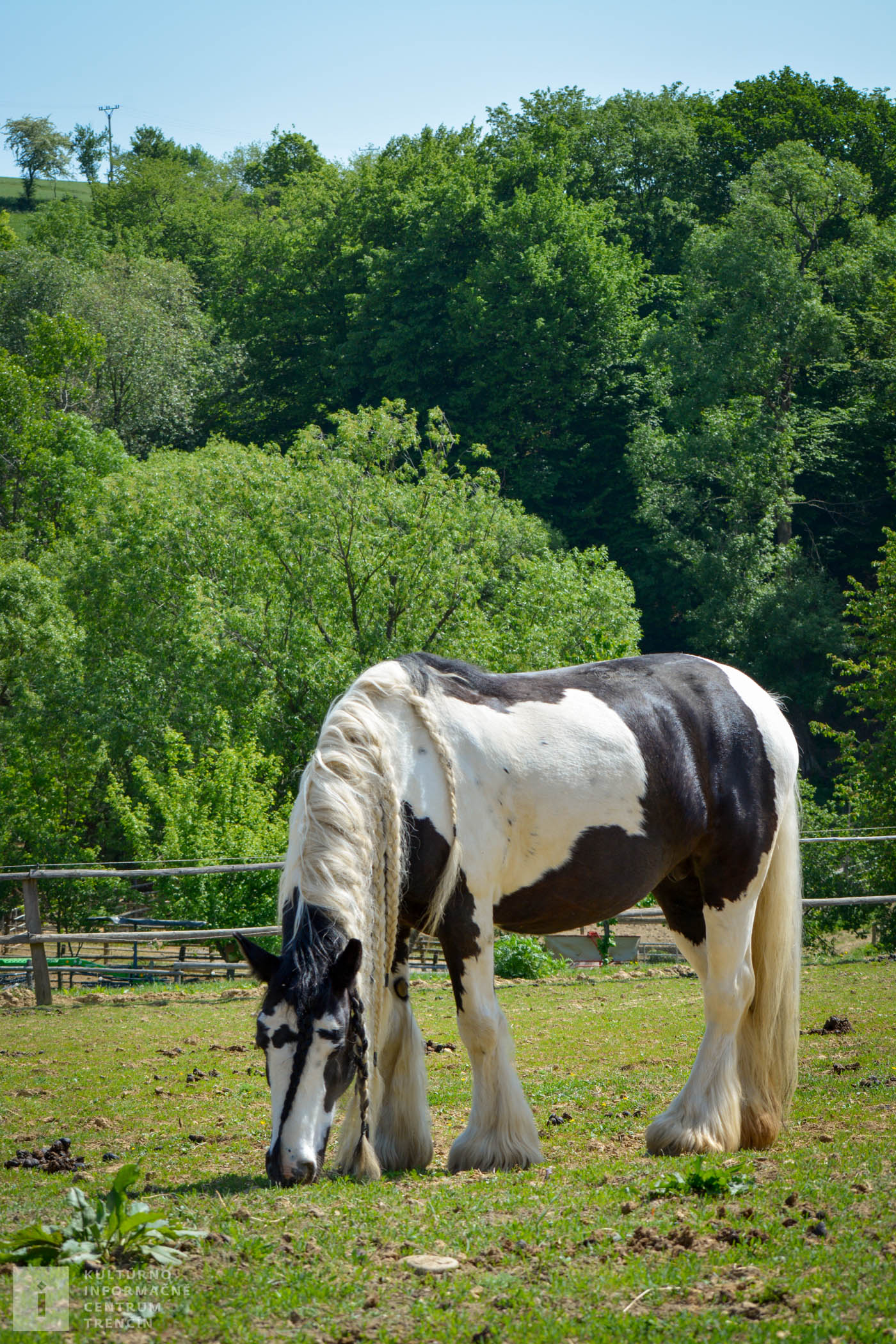 Pre kone na gazdovstve sú k dispozícii boxy, vonkajšie ohrady, vonkajšia a vnútorná jazdiareň, kruhovka.