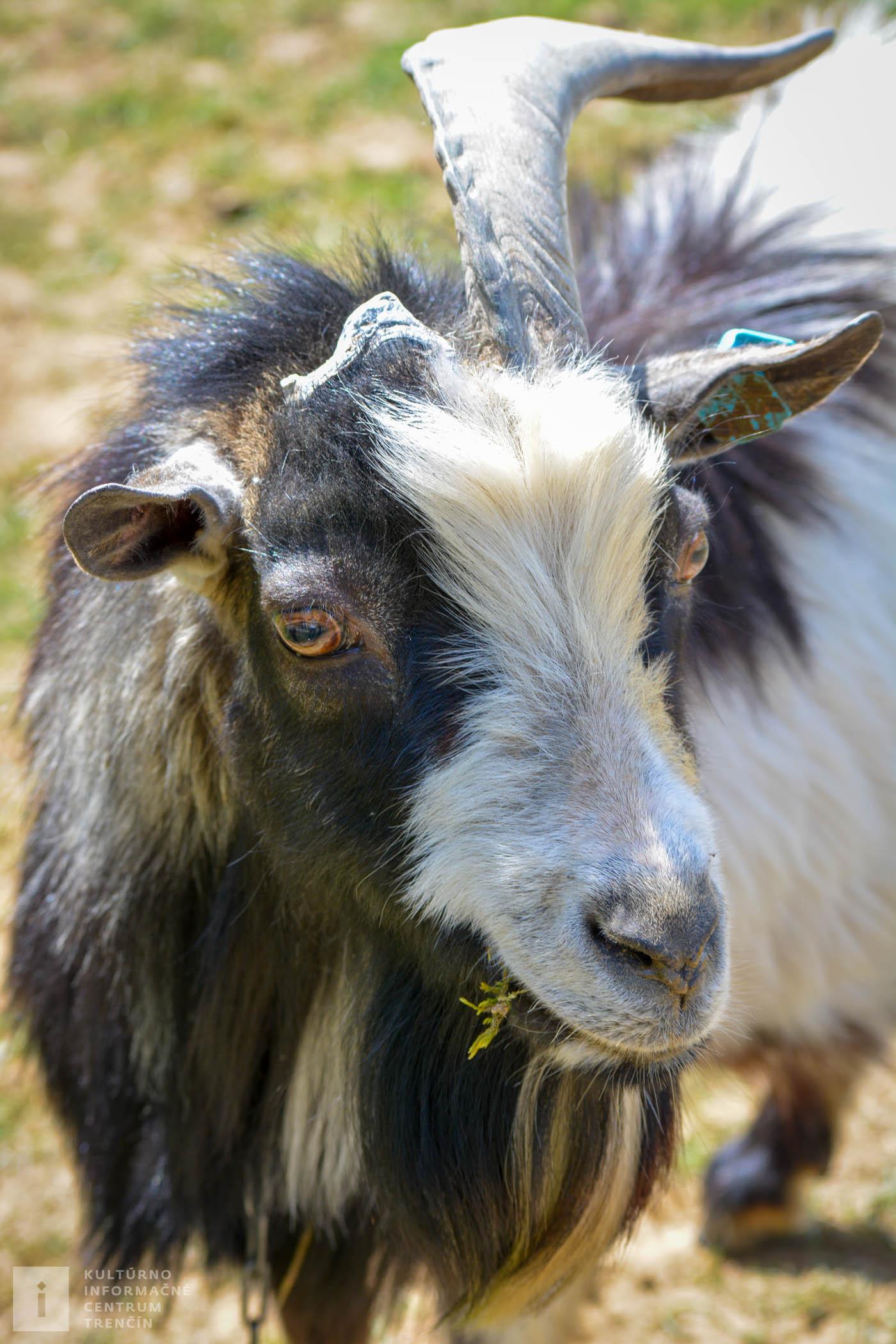 Vo výbehoch na farme nájdete rôzne druhy domácich zvierat.