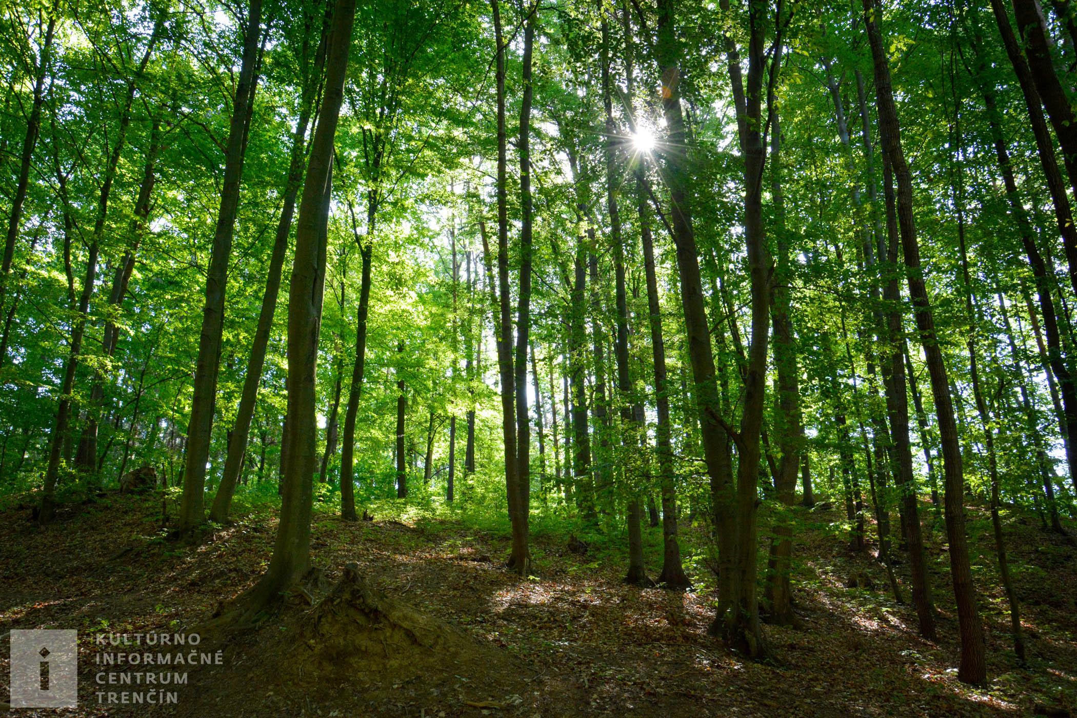 Na Považský hrad pôjdete príjemným lesným prostredím.