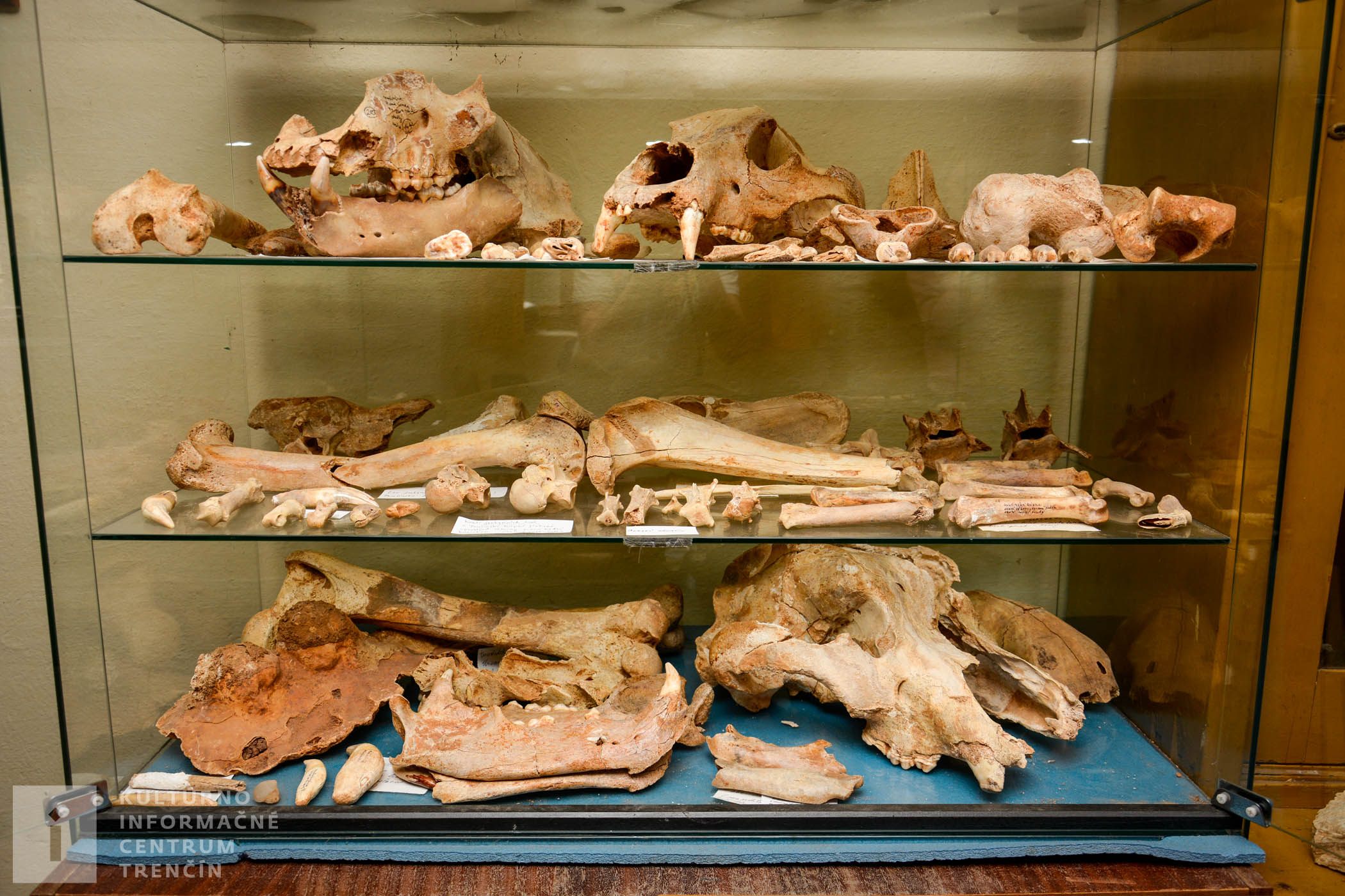 V dávnych dobách obývali tieto podzemné priestory okrem pravekých ľudí aj jaskynné medvede a jaskynné levy.