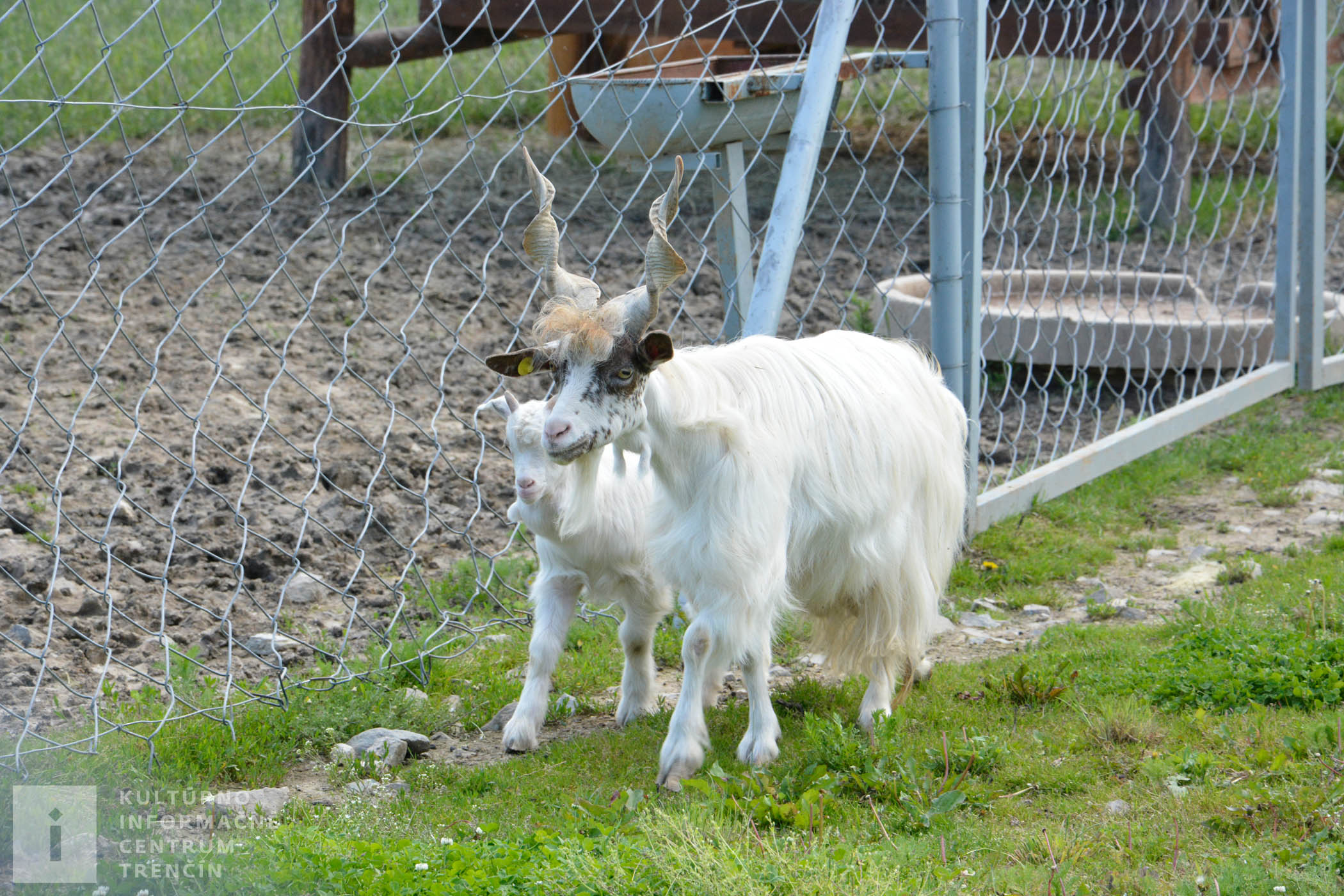 Hospodárske zvieratá na ranči chovajú už od jeho vzniku