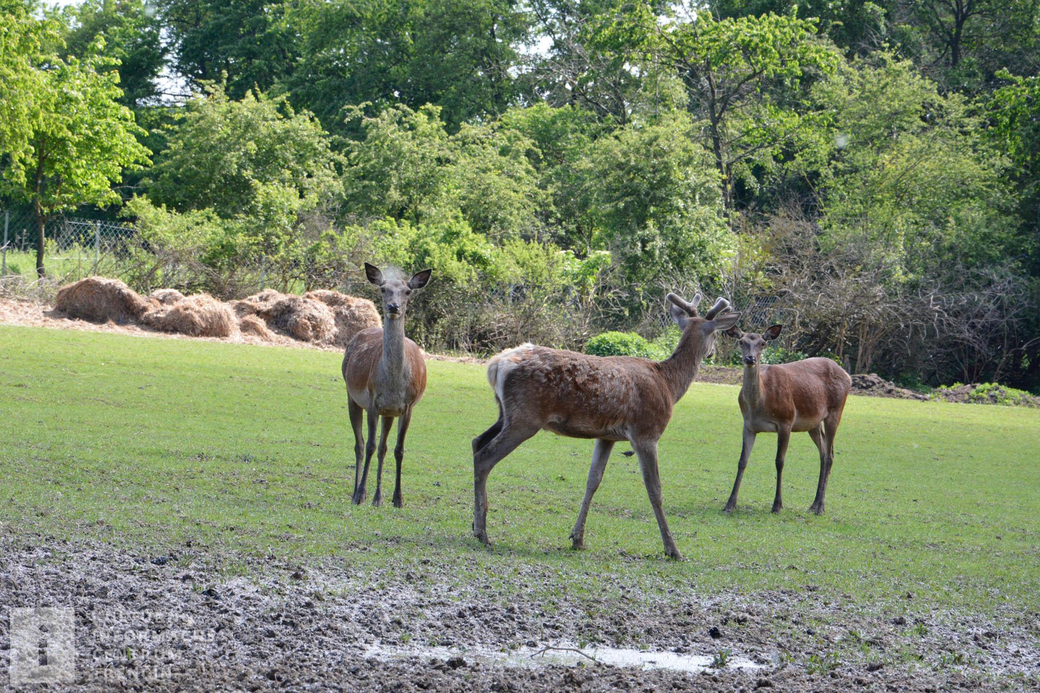 Na ranči nechýba ani lesná zver