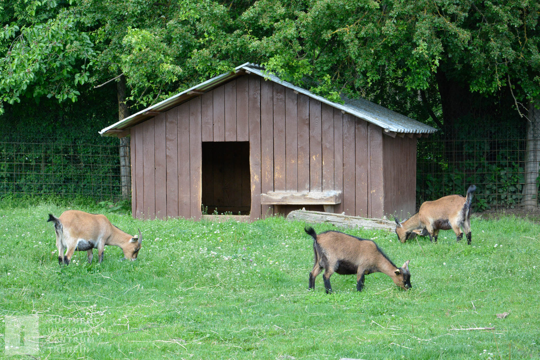Zvieratá na ranči