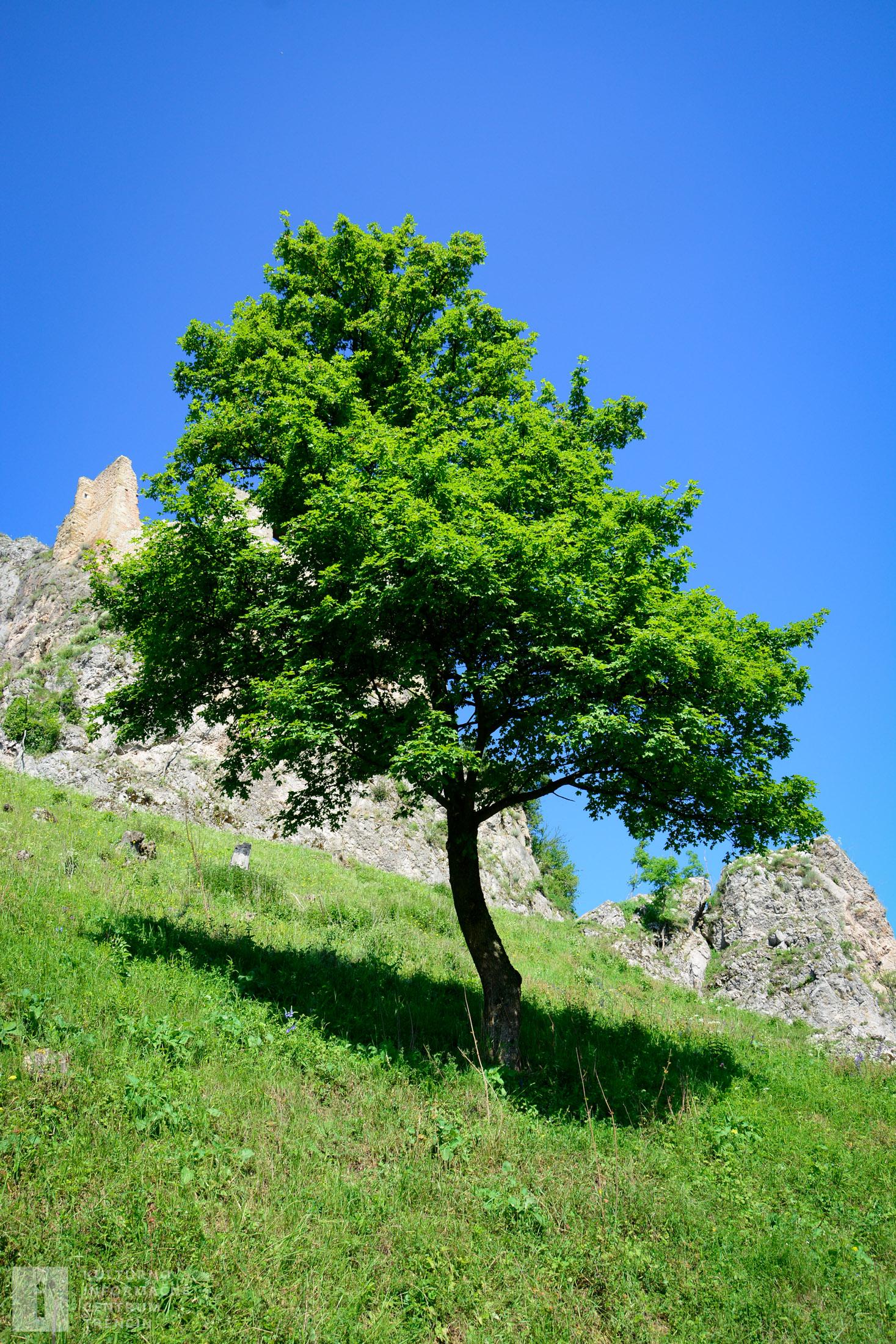 Podhradie pri hrade Lednica