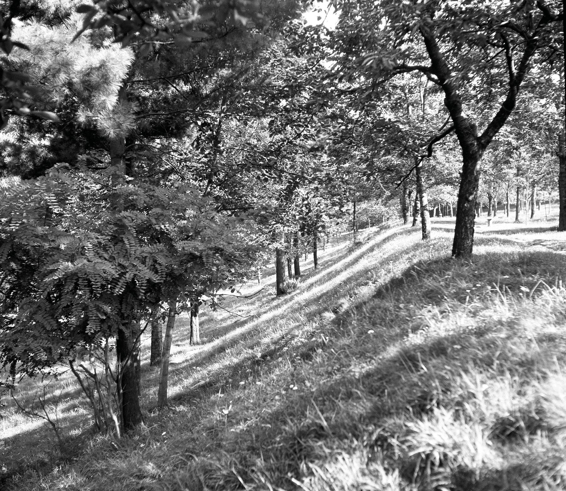 Svahy, ktoré v Čerešňovom sade prekrývajú opevnenie z doby bronzovej