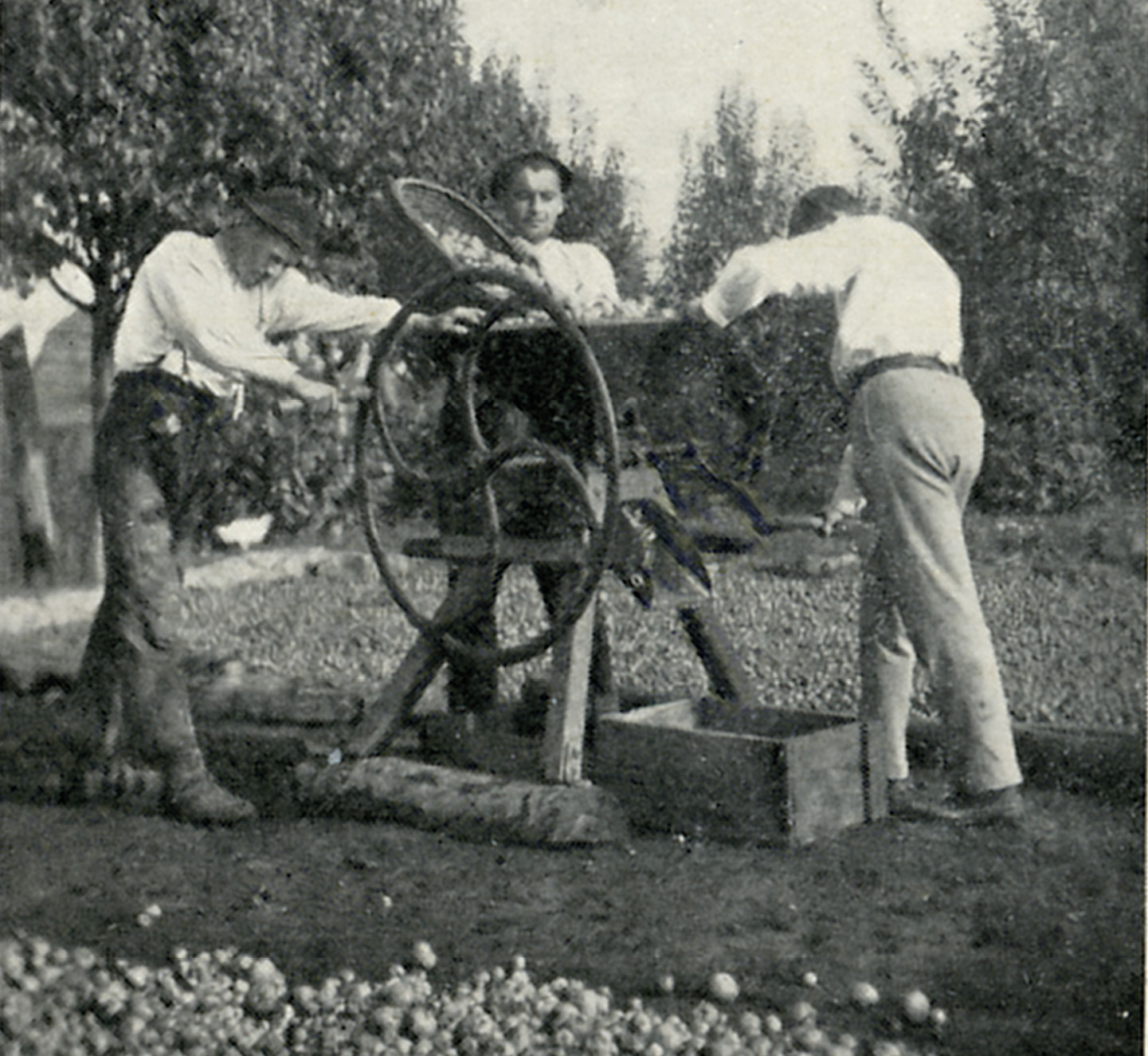 Získavanie jadier z ovocia