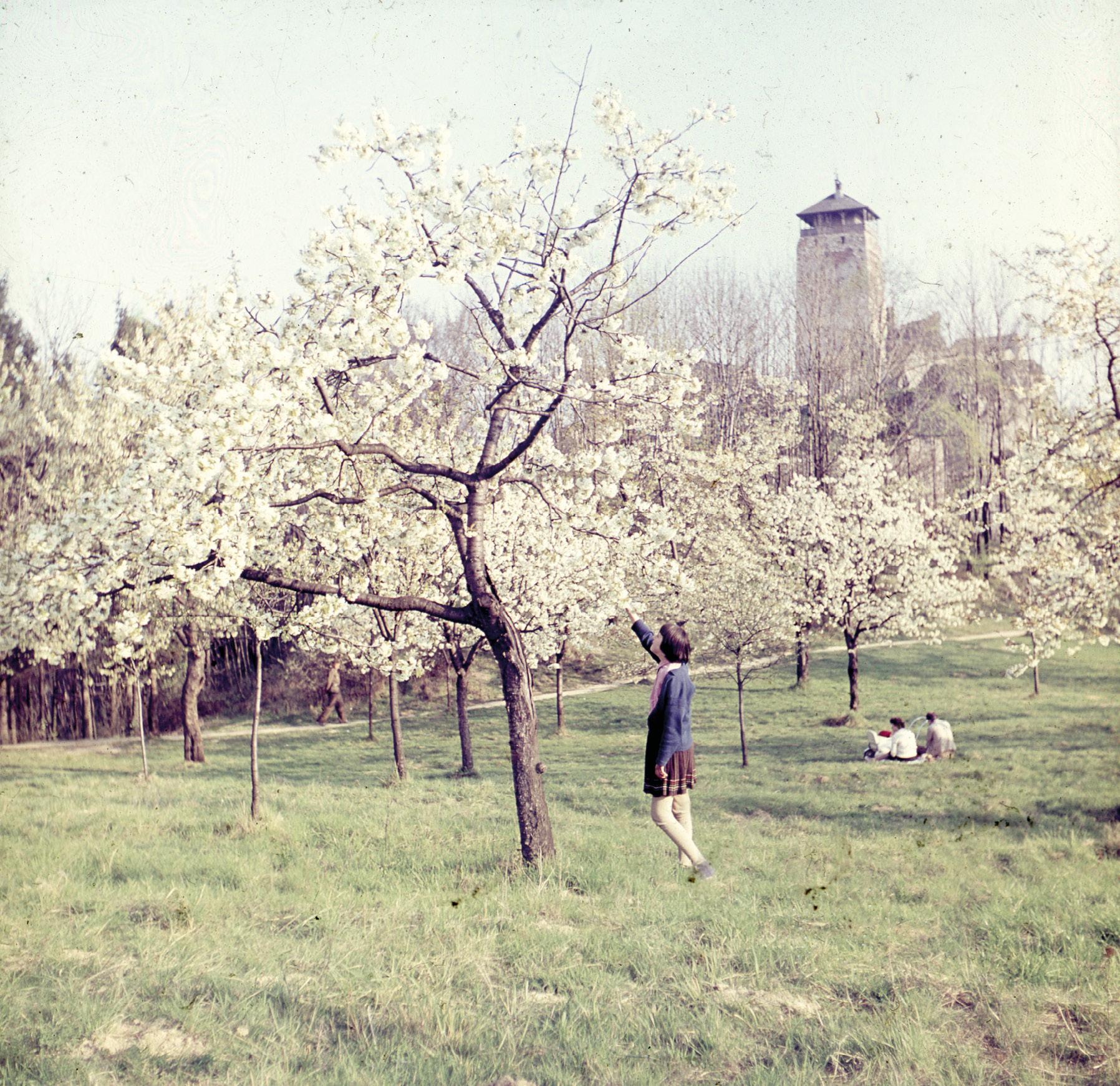 Romantická momentka v Čerešňovom sade