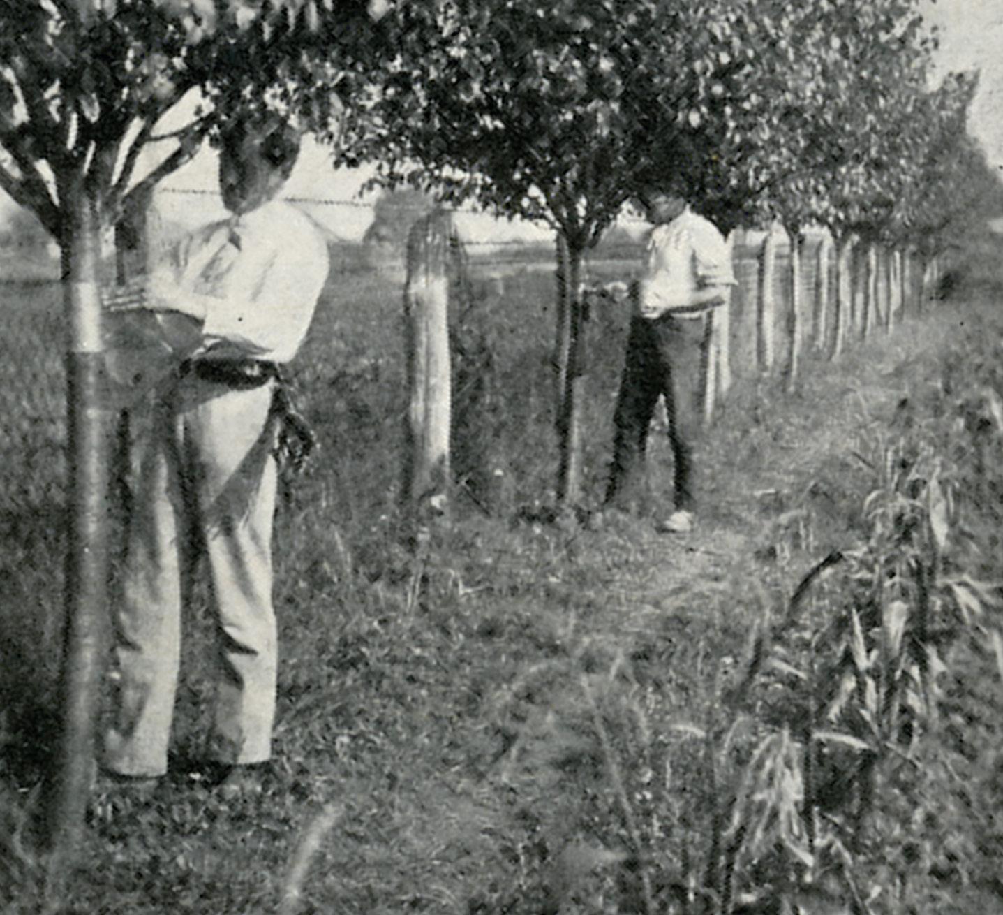 Ochrana stromov pred škodcami