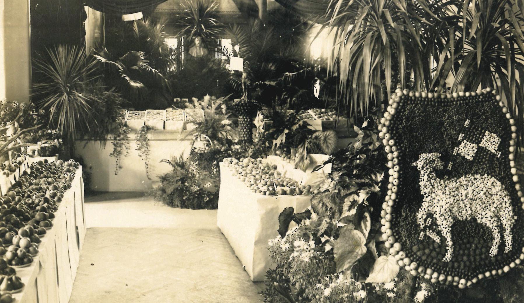 Prvá výstava ovocia z Trenčína
