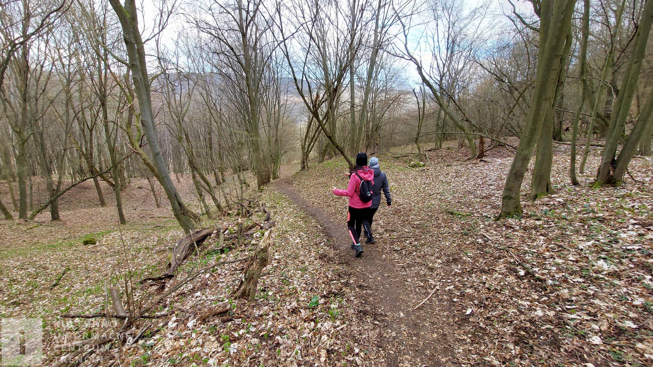 Pokračujeme cestou v lese